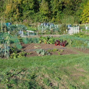 Council Allotments image